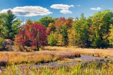 Autumn Marsh 28378