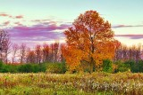 Autumn Tree At Sunrise 20121009