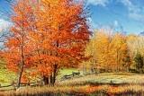 Autumn Landscape 29423