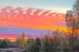 Sylvan Sunrise 29541-3