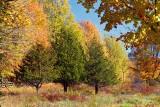 Three Pines 29637