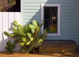 Cactus Outside Window