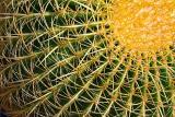 Cactus Closeup 20060202