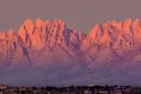 Organ Mountains in Sunset 31630