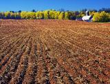 New York Farm