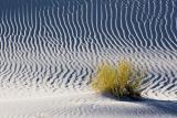 White Sands 32206