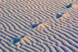 White Sands 32046