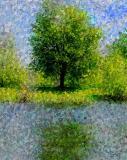 Dow's Lake Tree Art