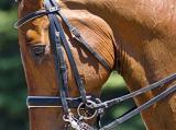 Dressage Horse 20060624