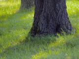 Trunks in Grass