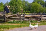 Upper Canada Village 37535