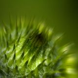 Shallow Flora 20060808