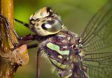 Dragonfly Closeup 20060911