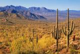Desert Vista 81476