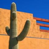 Town Saguaro 82385