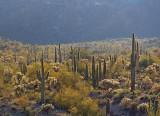 Desert Scene 82668
