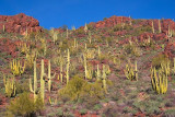 Cactus Covered Mountain Slope 83034