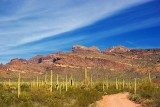 Road to the Ajo Mountains 82923
