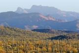 Desert Scene 83328