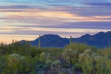 Desert Near Sunset 84813