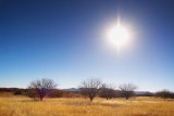 Desert Grassland 20080227