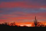 Desert Sunrise 20080308