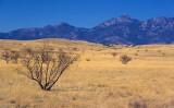 Desert Grasslands 86427
