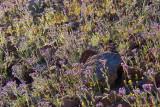 Backlit Wildflowers 86134
