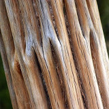 Dead Saguaro Trunk 85815