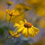 Yellow Wildflowers 86460