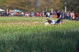 Tulip Festival 89079