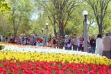 Tulip Festival Crowd 89094