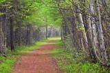 Lime Kiln Trail 89219