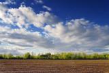 Farmer's Field 13334