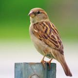 Little Brown Bird 14137