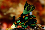 Nudibranchs & Worms