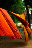 flying saffron