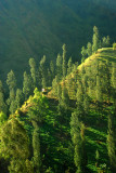 tanah air indonesia