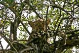 leopard_7588.jpg