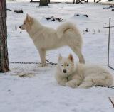 Mollie and Dixie.jpg