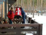 getting the sled ready.jpg