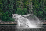 wildlife_in_alaska
