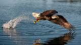 birds_of_south_east_alaska