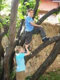 The tree climbers