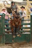 Saddle Bronc I