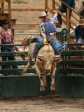 Bull Riding II