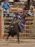 Bull Riding III