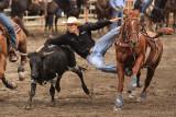 Steer Wrestling III