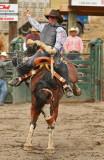 Saddle Bronc III