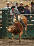Bull Riding IV